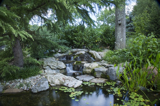 Meditation:  Magical garden pond;  a place of wishes